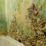 Декор ванной комнаты инкрустация из морских раковин