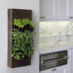 Вертикальное озеленение современной кухни