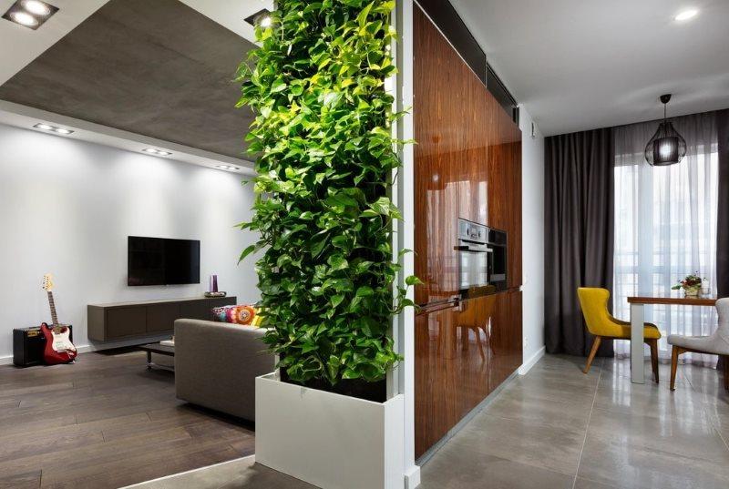 Вьющиеся растения в интерьере кухни-гостиной