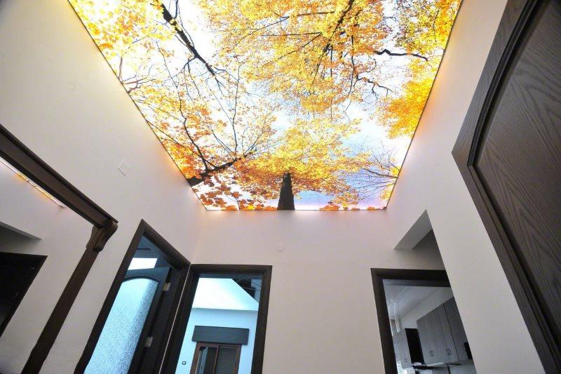 Фотопечать осеннего леса на потолке коридора