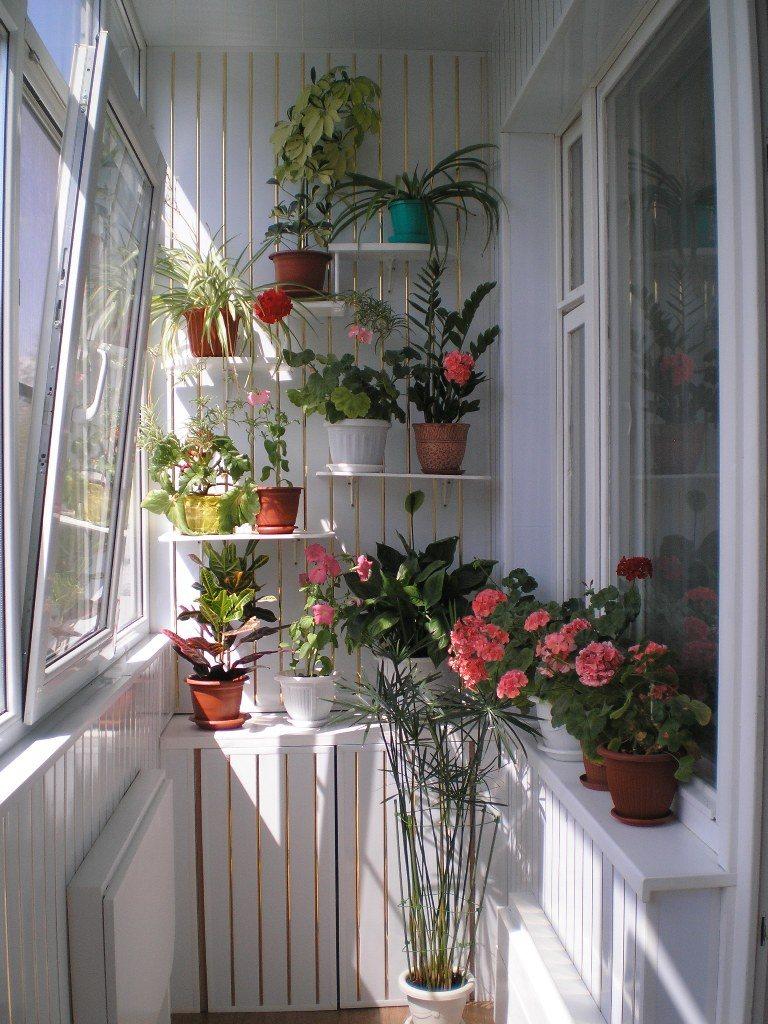 свою фото цветы на балконе дизайн фото хотели