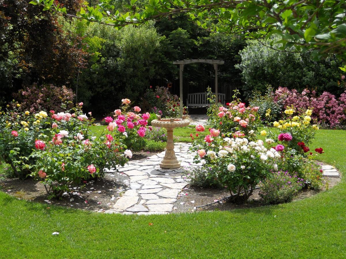 попытки пробиться розы на садовом участке фото современное