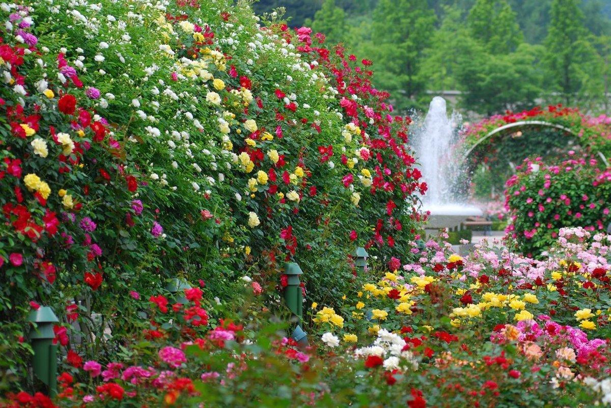 разбавим твое сад моей души фото братья сестра