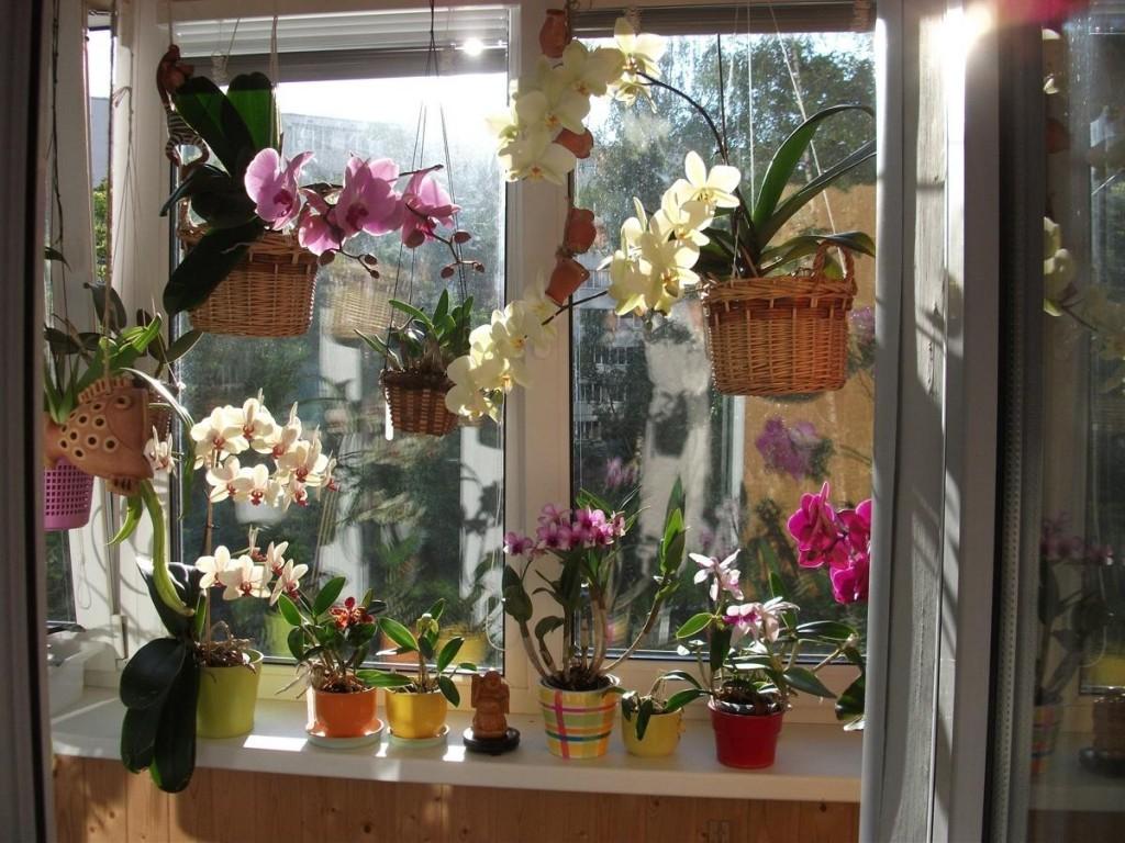 Цветущие растения на балконе с пластиковым окном