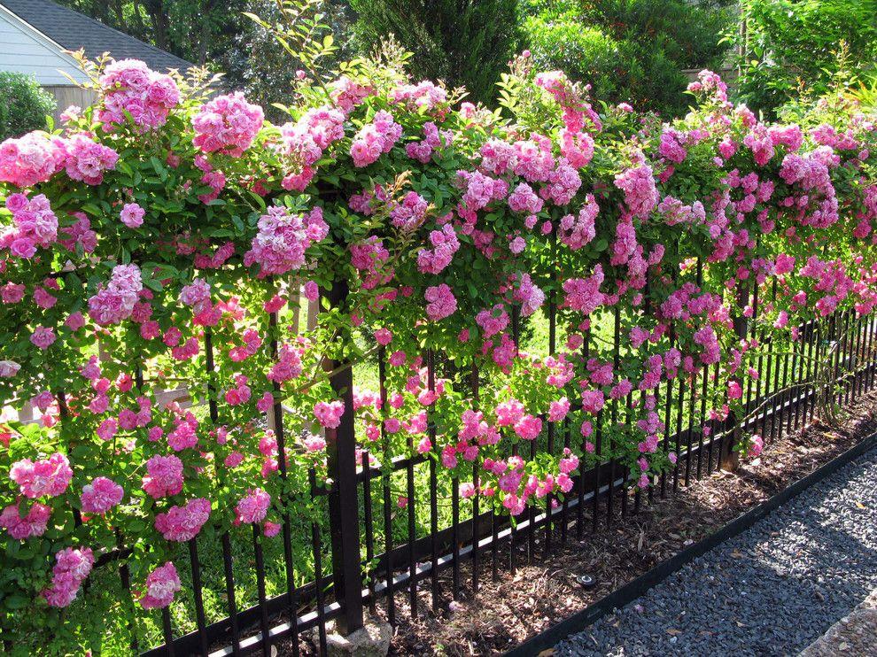 Розовые цветы на металлическом заборе ручной ковки