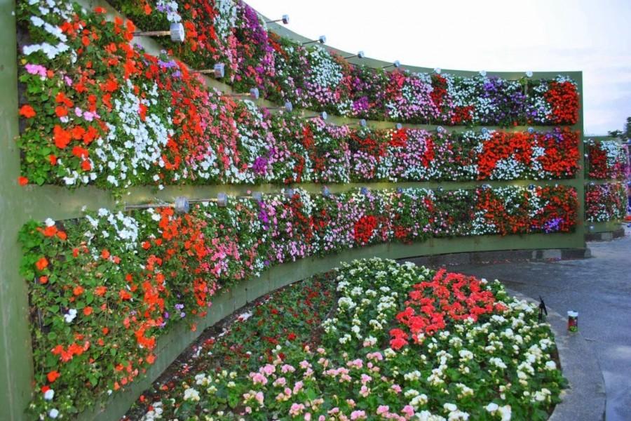 Фитостена из цветущих растения на дачном участке