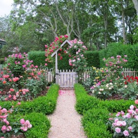 Красивый палисадник с цветущими розами