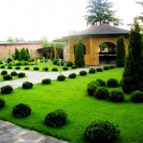 Зеленый газон на дачном участке