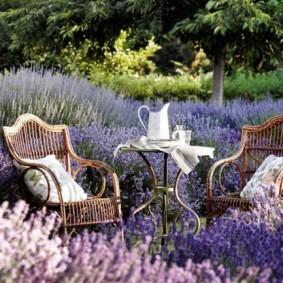 Плетенная мебель среди цветущей лаванды