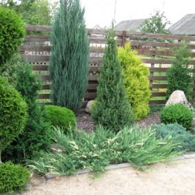 Хвойные растения перед деревянным забором