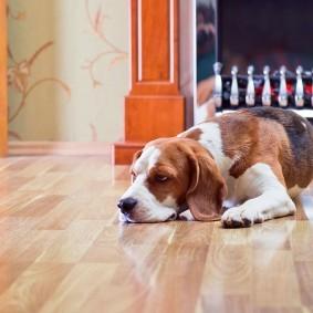 Породистая собака на глянцевом полу