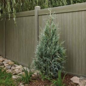 Невысокий кипарис перед забором садового участка