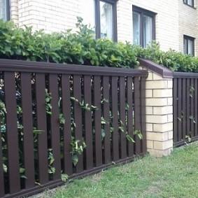 Живая изгородь за забором из штакетника