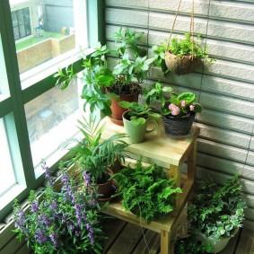 Балкон квартиры с зелеными растениями