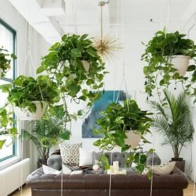 Вьющиеся растения в подвесных горшках