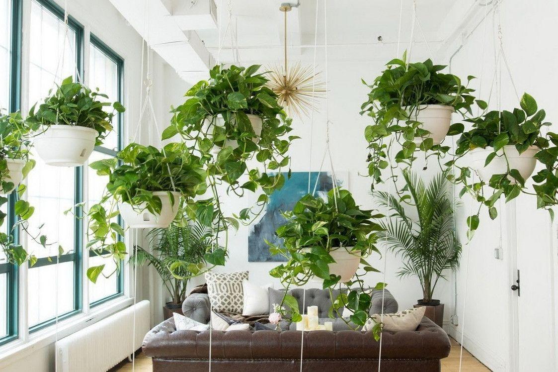 как благоприятные растения для дома фото с названиями делать