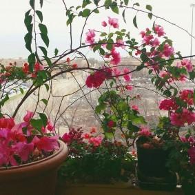 Красивый цветок на подоконнике в квартире