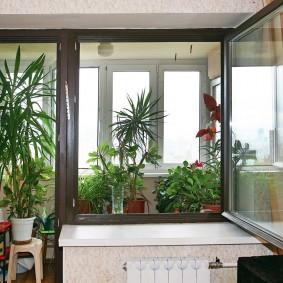 Комнатные растения на балконе квартиры в панельном доме