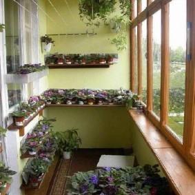 Горшки с фиалками на полках балкона