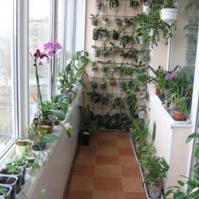 Небольшой балкон с цветущими орхидеями