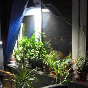 Подсветка цветов на подоконнике в квартире