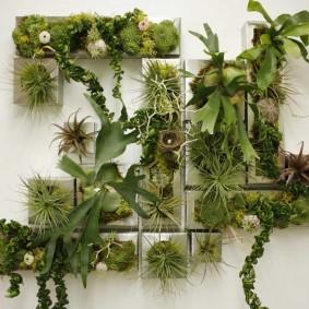 Живые растения на белой стене