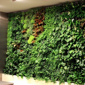 Зеленая стена из неприхотливых растений