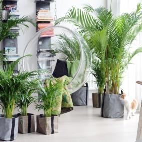 Пальмы в кадках на полу в квартире