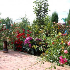 Кусты роз около площадки для отдыха