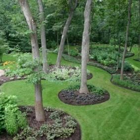 Оформление приствольных кругов высоких деревьев
