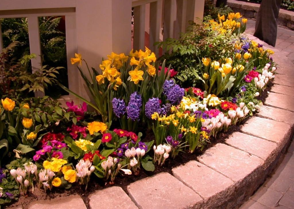 Компактная клумба с красивыми цветами