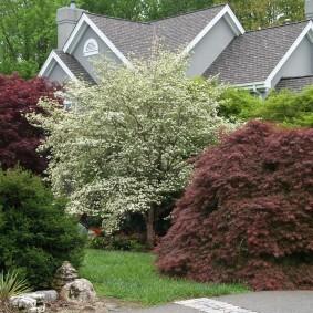 Цветущее дерево в начале лета на садовом участке