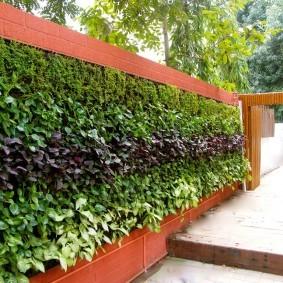 Вертикальное озеленение деревянного забора