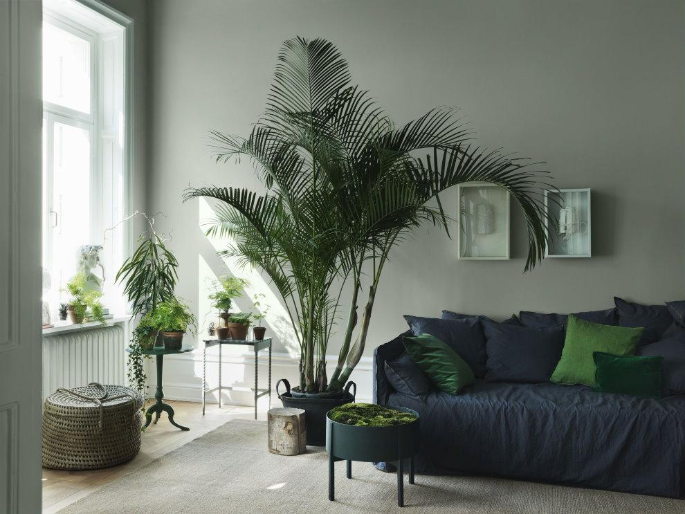 Высокая пальма в интерьере квартиры
