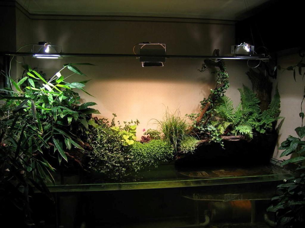 Подсветка комнатных растений в условиях квартиры