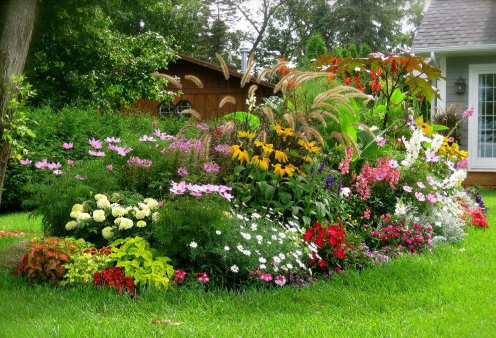 Цветущие многолетники на клумбе пейзажного сада