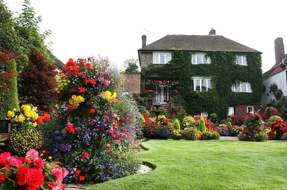 Цветущие розы в саду английского стиля