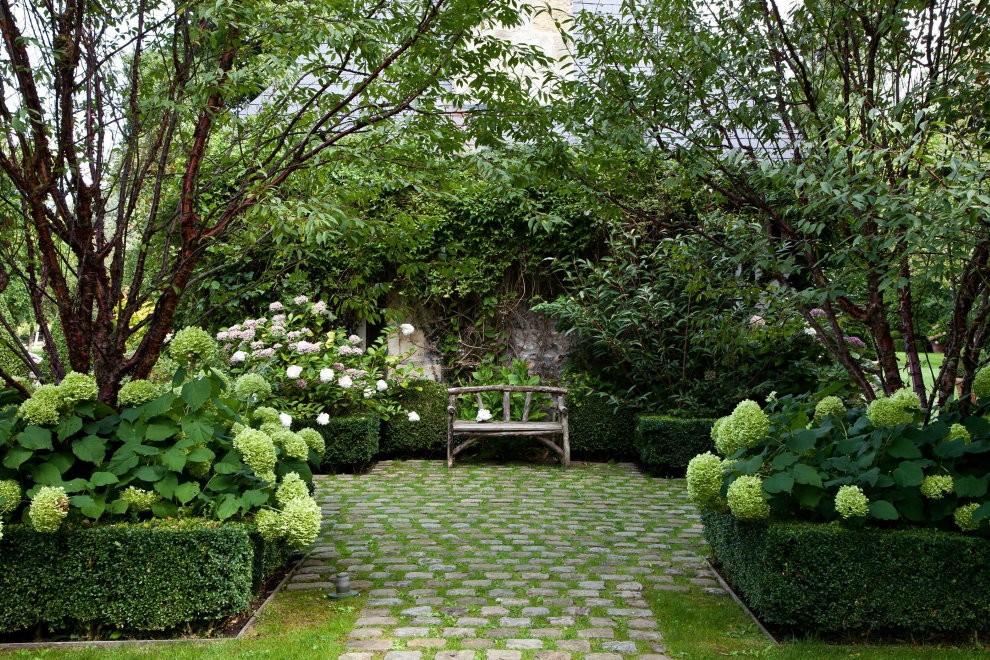 Метельчатая гортензия на клумбе в саду английского стиля