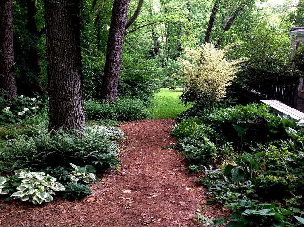 Небольшой участок сада в лесном стиле