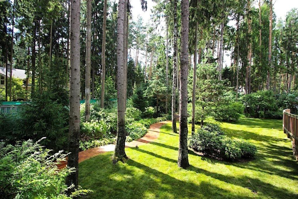Высокие деревья на участке в природном стиле