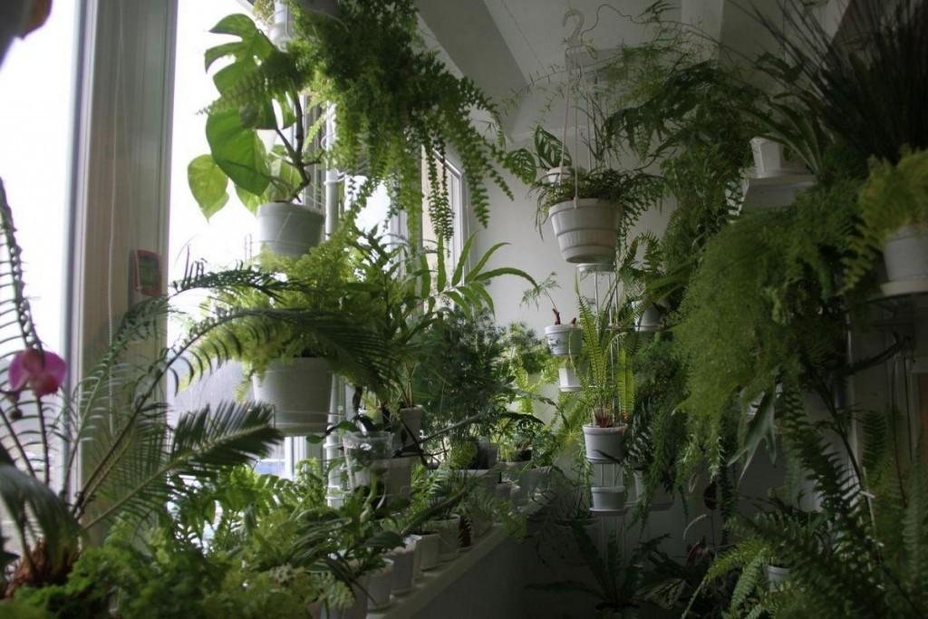 Обилие зеленых растений в интерьере лоджии