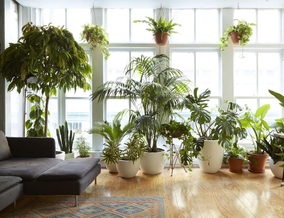Комнатные растения в зимнем саду городской квартиры