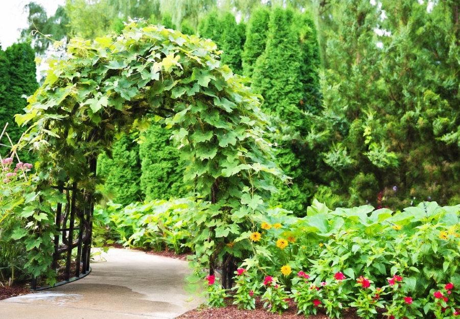 Разделение участка аркой с вьющимися растениями