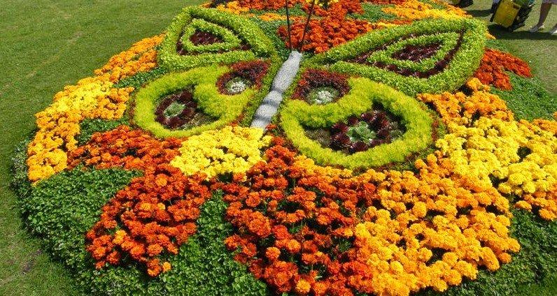 Бабочка из цветов на клумбе с бархатцами