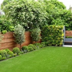 Прямоугольный газон на участке с деревянной оградой