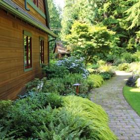 Лесные папоротники на клумбе у деревянного дома