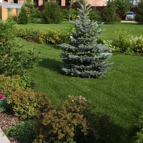 Маленькая елка в центре зеленого газона