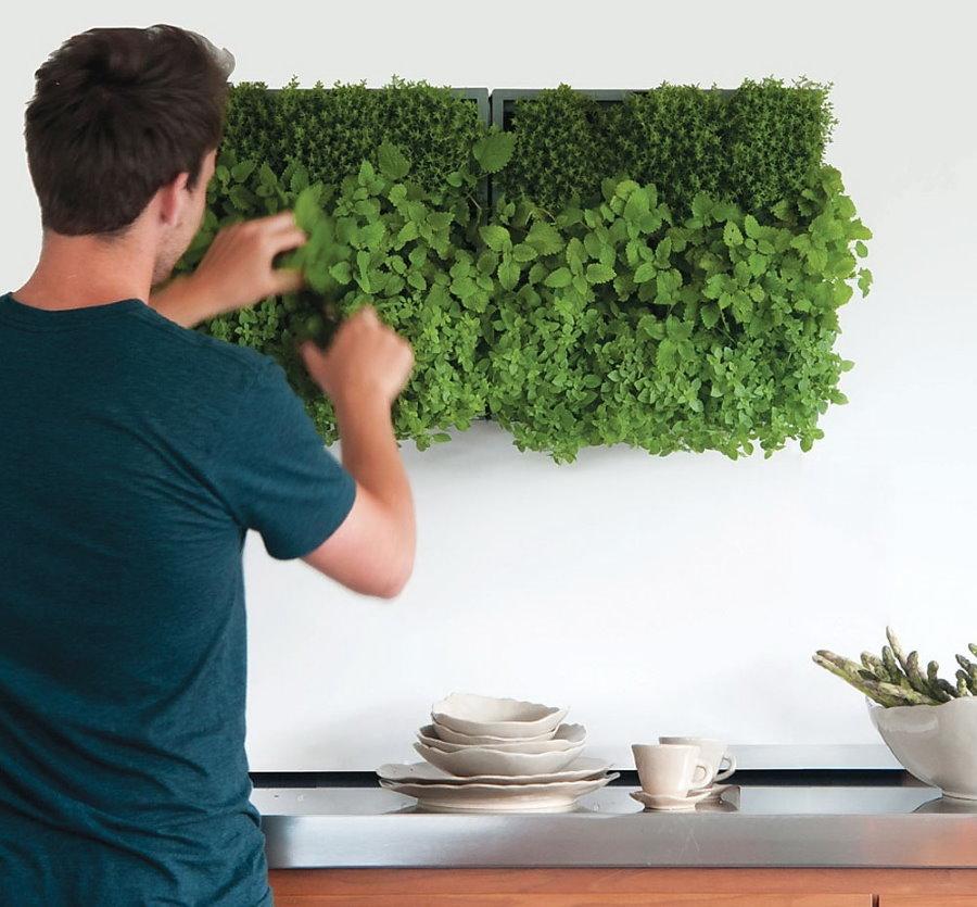 Выращивание трав на стене кухни в квартире