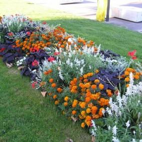 Длинная клумба с разными цветами на газоне