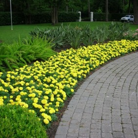 Желтые чернобривцы в парке культуры и отдыха